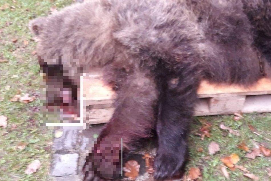 FOTO: Zrazený medveď v Prievidzi