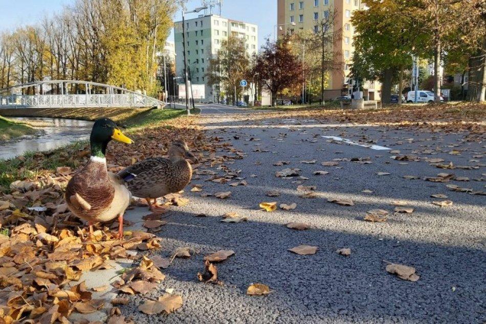 Mamičky v tom majú jasno: Lokality v jeseni, ktoré očaria nejedno dieťa