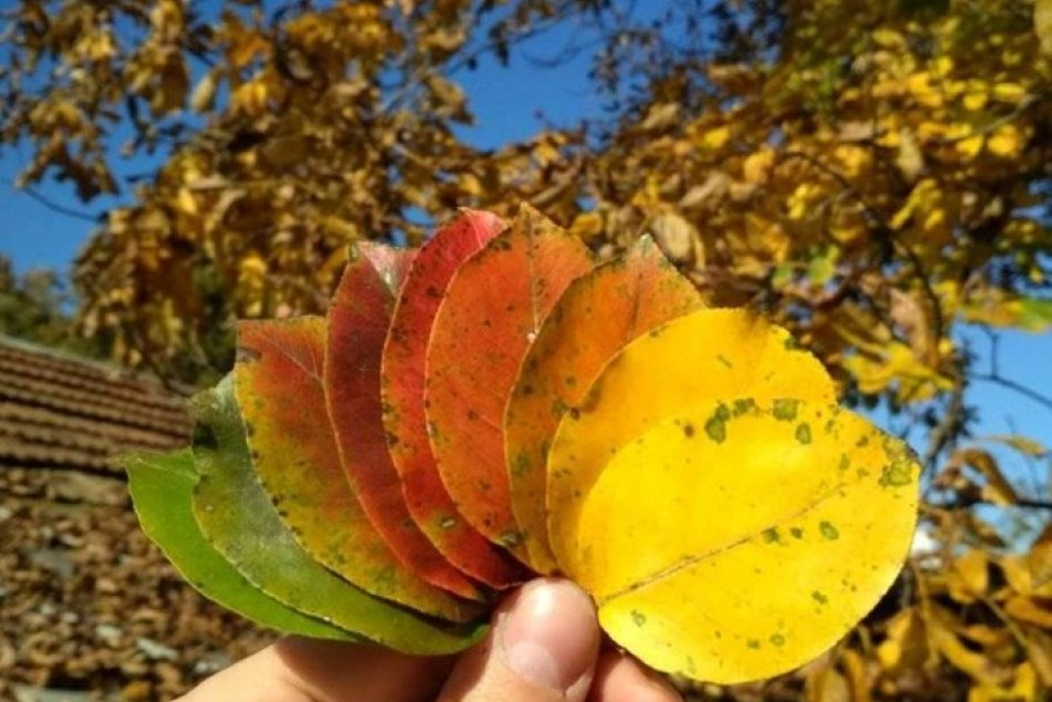 V OBRAZOCH: Takto čitatelia zvečnili jeseň vo Zvolene a okolí