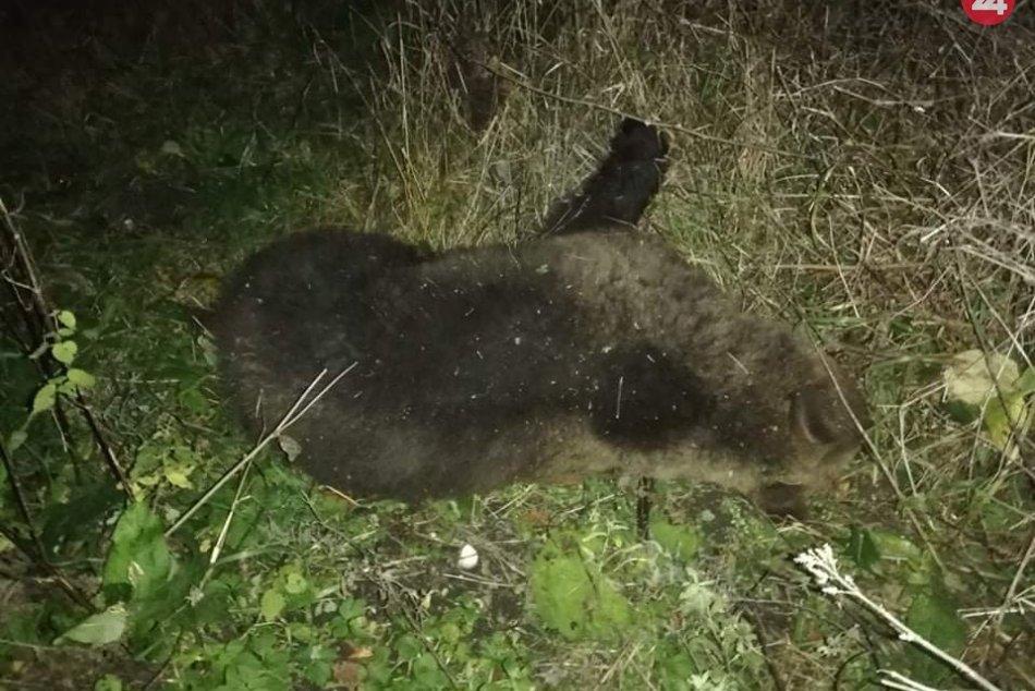 Medveď v okrese Prievidza vybehol na cestu a ...