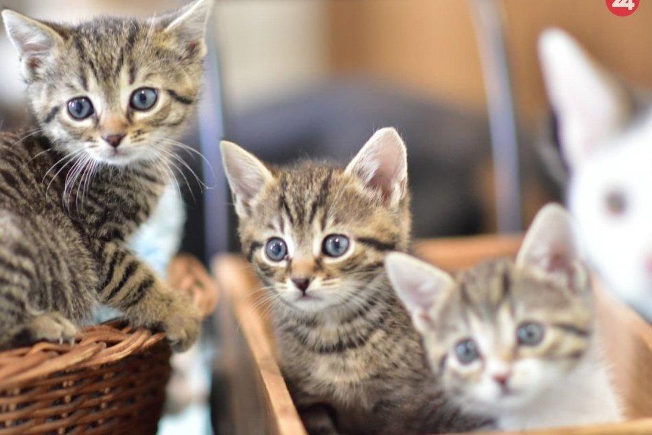 V OBRAZOCH: Aj tieto mačičky z Mačkinho Majera si hľadajú nový domov