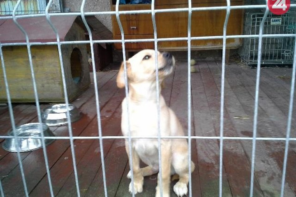 V OBRAZOCH: V Bystrici odchytili 2 psíky. Nespoznávate ich?