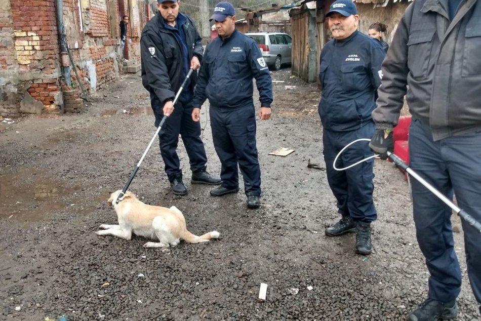 V OBRAZOCH: Akcia zameraná na odchyt túlavých psov vo Zvolene