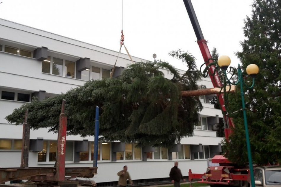 FOTO: Takto sa osadil vianočný stromček v Považskej Bystrici