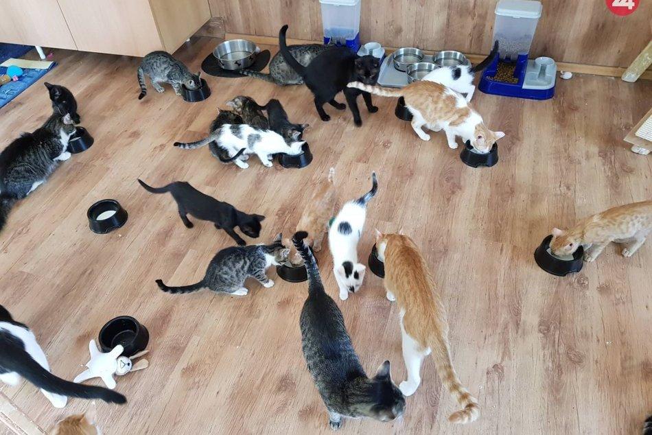 V OBRAZOCH: Aj tieto mačičky z Bystrickej Mačačárne si hľadajú nový domov