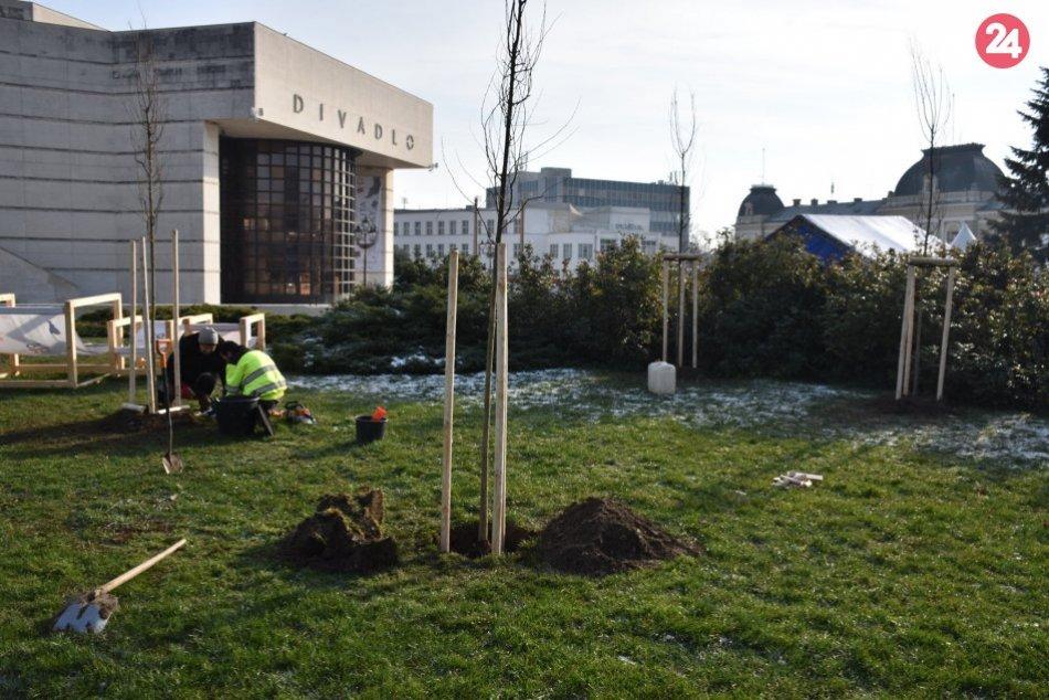 Staré stromy z pešej zóny odstránili: Nahradia ich nové a väčšie, FOTO