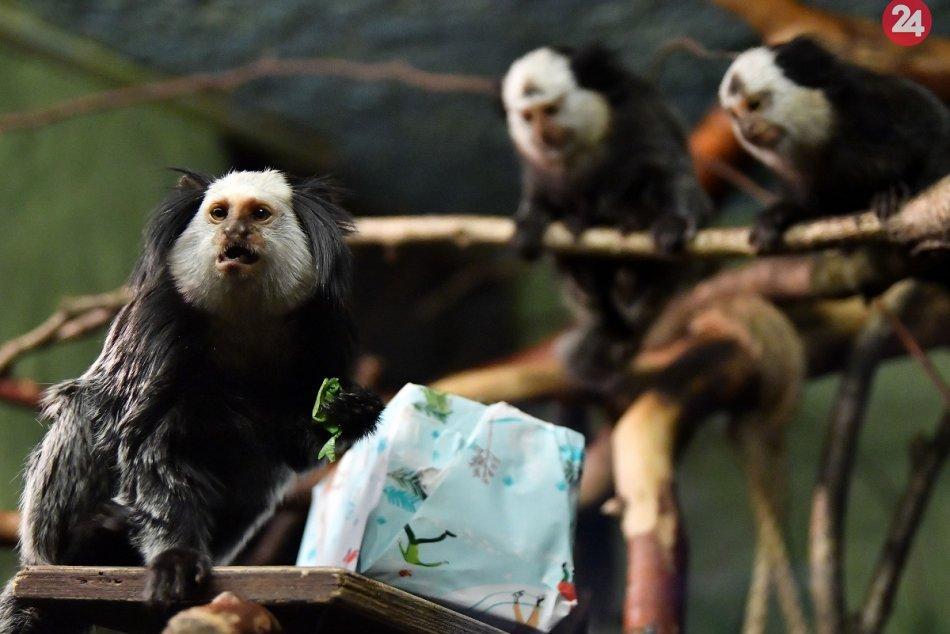 Vianoce v zoo 2019