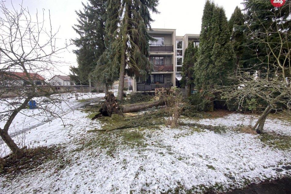 FOTO: Vyvalený strom v Demänovej