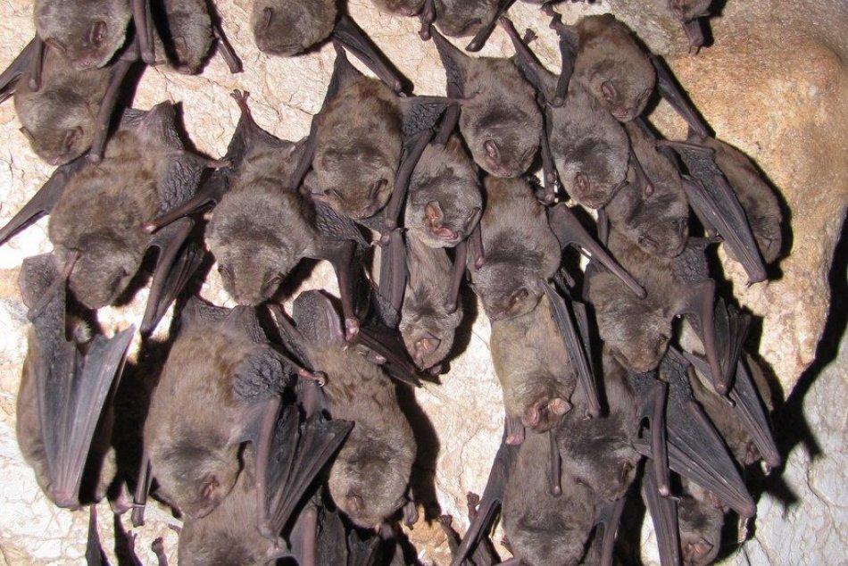 Obrazom: Zimné sčítanie netopierov