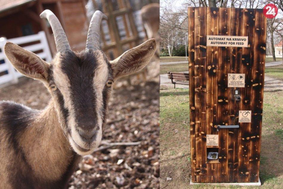 V parku pribudol nový automat na krmivo pre zvieratá