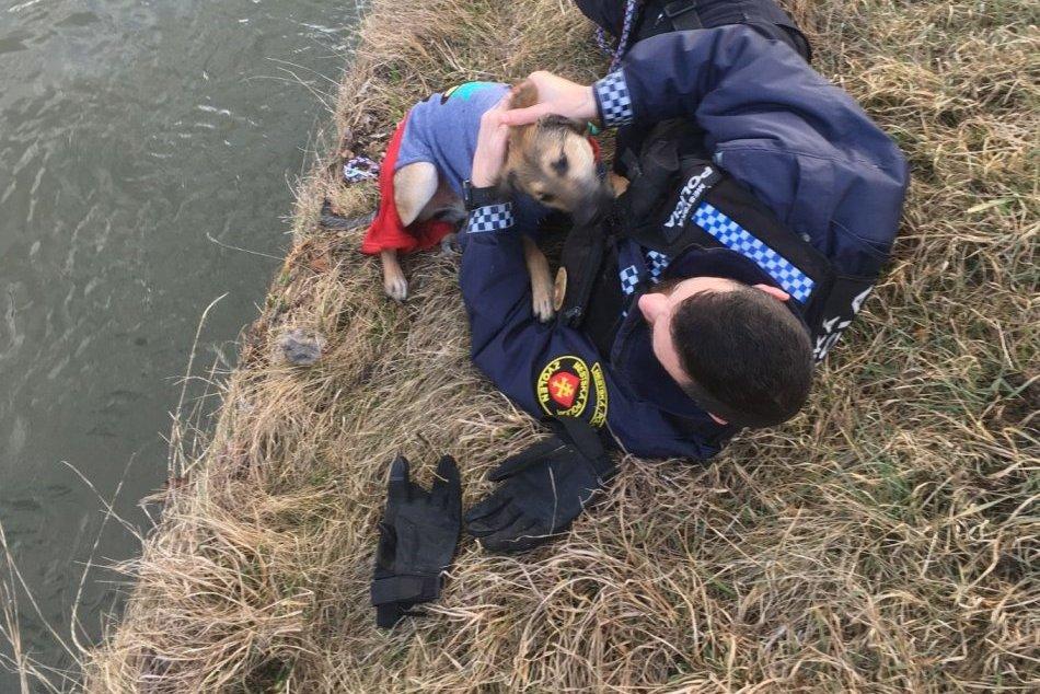 V OBRAZOCH: Mestskí policajti zachránili z Hrona psíka