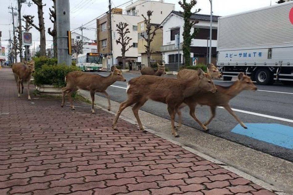Zvieratá obsadili mestá v karanténe