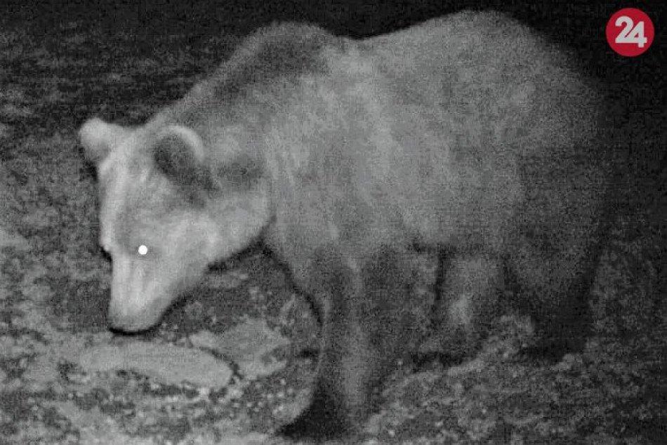 FOTO medveďa z Považskej Teplej: Lokalita Teplanské prevraty
