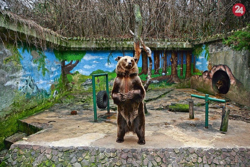 Medveď v ZOO Bratislava
