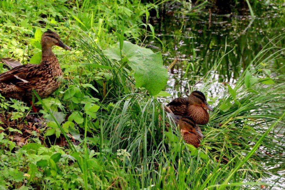 """V OBRAZOCH: Nádherné zábery z rybníka """"Pod Rybou"""" po daždi"""
