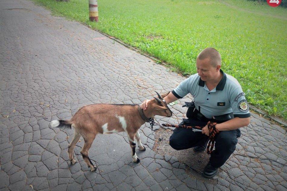 V OBRAZOCH: Mestská polícia zadržala Štefana v Mestskom parku