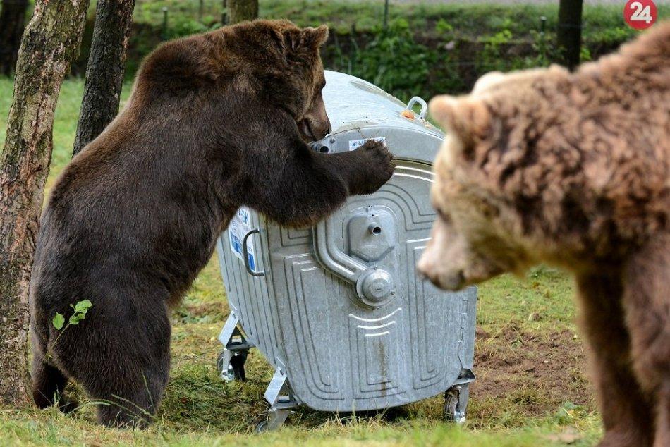 FOTO: Medvede stretávame častejšie aj mimo lesov