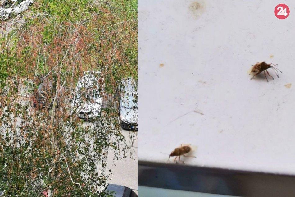 Obyvateľov Nitry trápi nepríjemný hmyz
