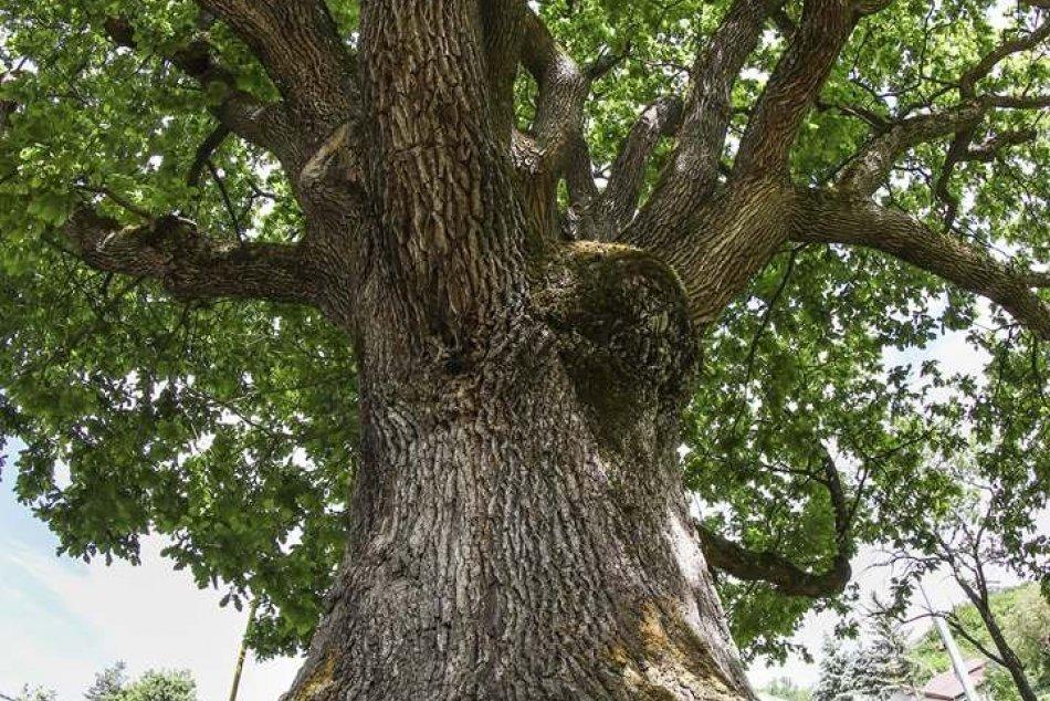 Obrazom: V ankete Strom roka 2020 aj reprezentant z nášho okresu