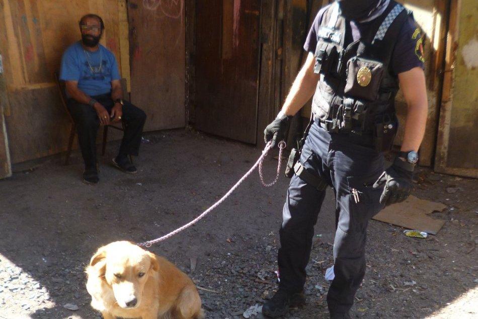 V OBRAZOCH: Veľký odchyt túlavých psov pod Pustým hradom