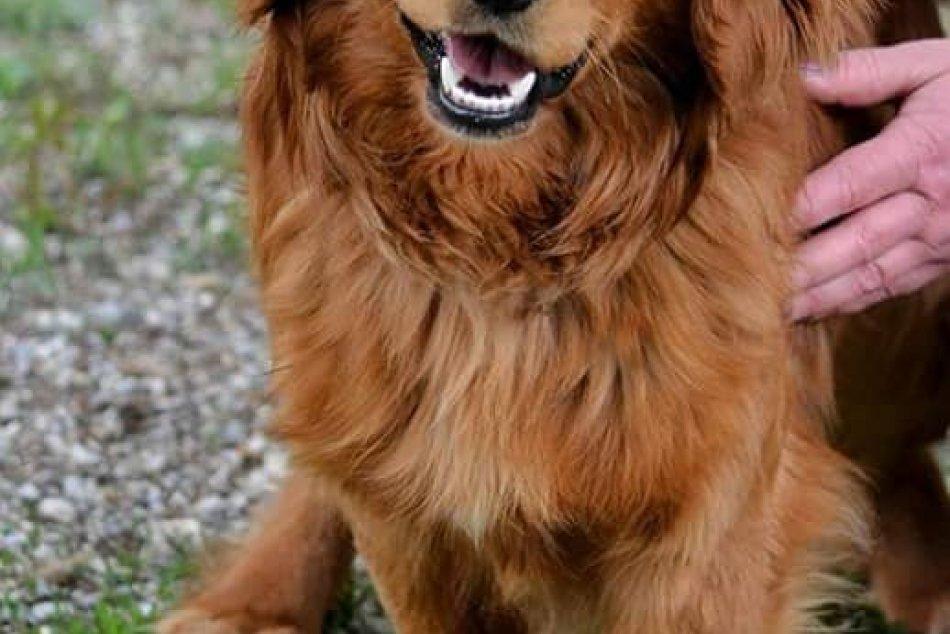 Obrazom: GALÉRIA psíkov z rožňavského útulku
