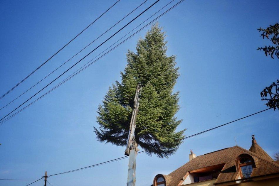 Obrazom: Príprava a osadenie vianočného stromčeka v Prešove