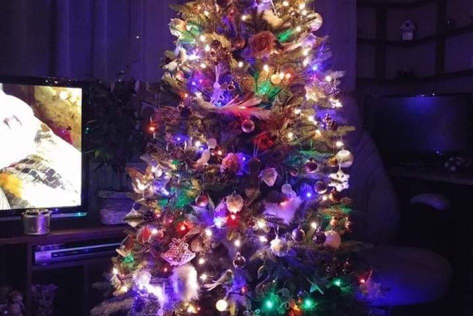 V OBRAZOCH: Revúčania sa pochválili krásnymi vianočnými stromčekmi
