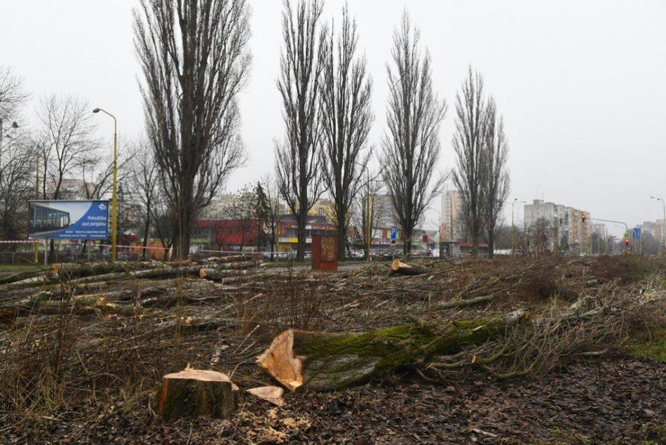 V OBRAZOCH: Výrub stromov na Slaneckej