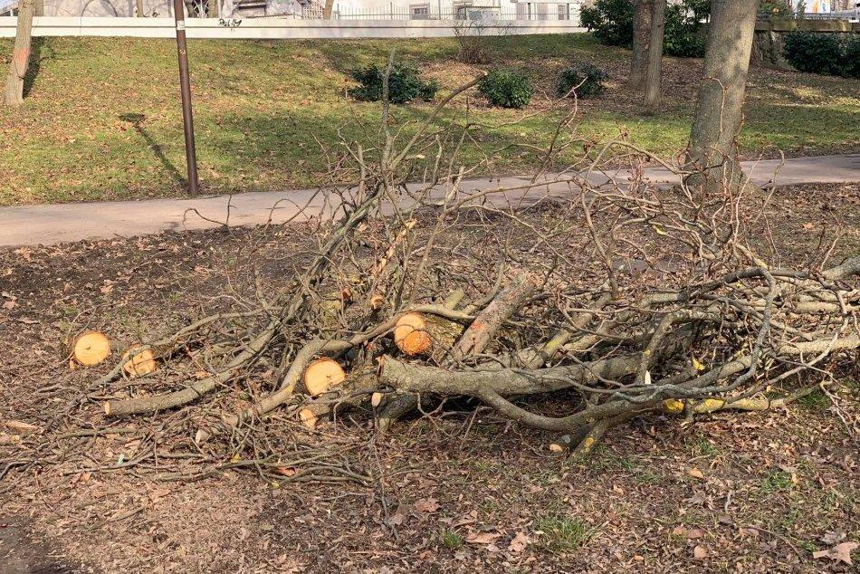 Orezy stromov a upratovanie v Sade Janka Kráľa