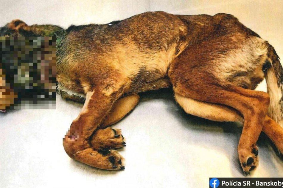 Neďaleko Lučenca bol psík utýraný k smrti