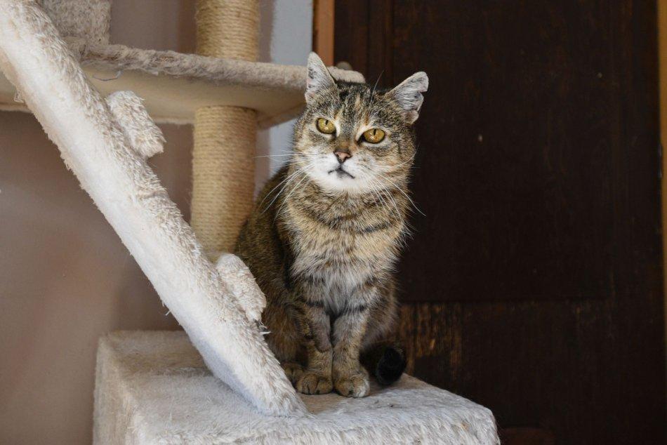 V OBRAZOCH: Takto vyzerá Bystrická Mačačáreň zvnútra