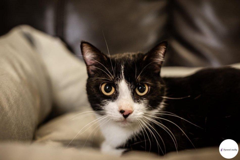 V OBRAZOCH: Tieto dve mačičky z Revúcej hľadajú nový domov