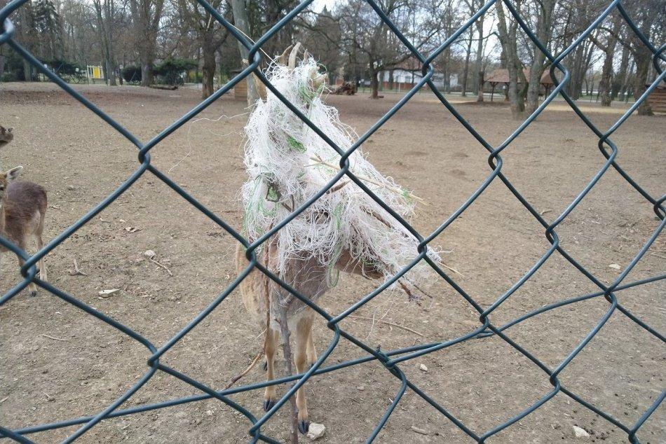 Danielovi v mestskom parku sa do parohov zamotalo vrece