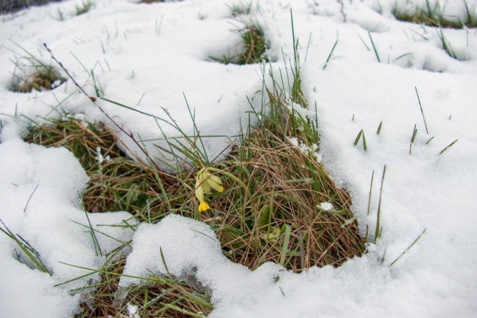 FOTO: Sneženie v obci Chvojnica