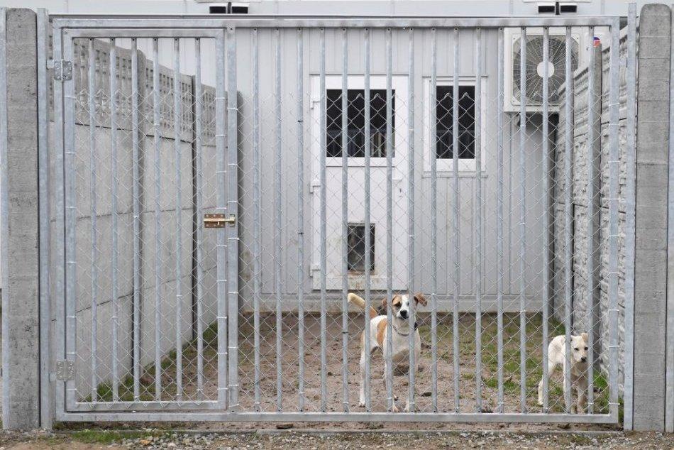 Karanténna stanica pre psov