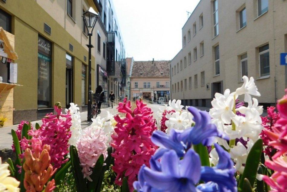 FOTO: Takéto kvetinové záhony a kvety krášlia mesto. Potrebujeme ich trhať?