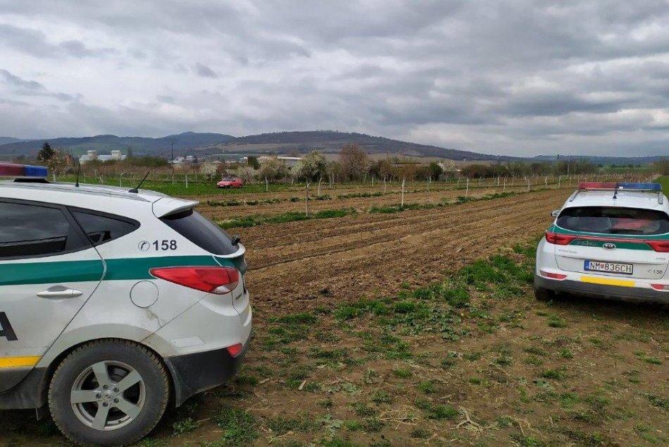 FOTO: Z ovocnej škôlky v Moravskom Lieskovom ukradli 140 stromčekov