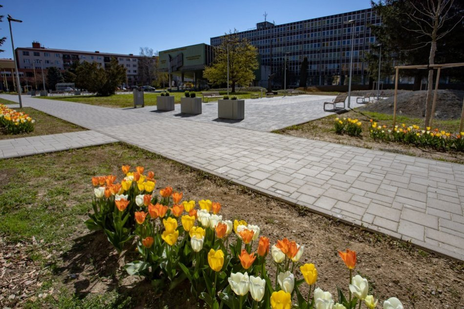 Objektívom: Pri Prešovskej univerzite žiari aleja tulipánov
