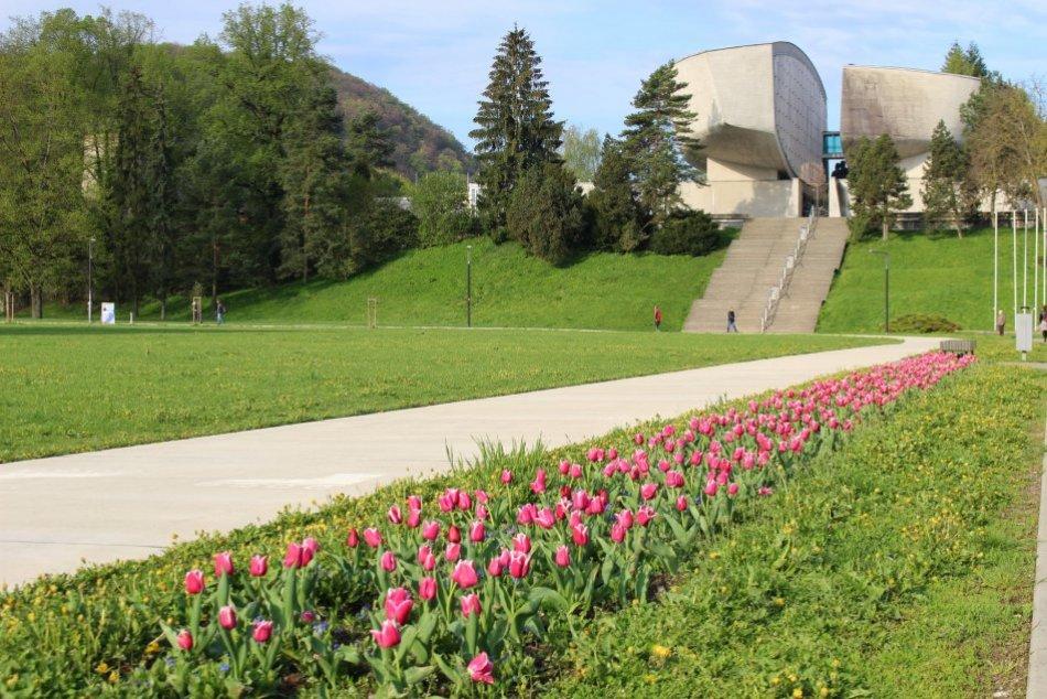 V OBRAZOCH: Bystricu rozžiarili jarné kvetinové záhony