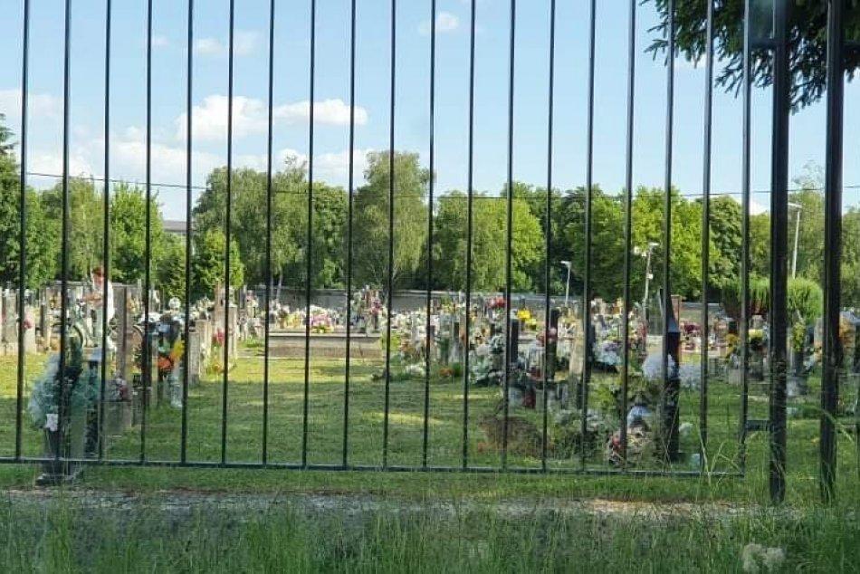 Zajac sa vybral na cintorín: Porušil zákaz vstupu zvieratám