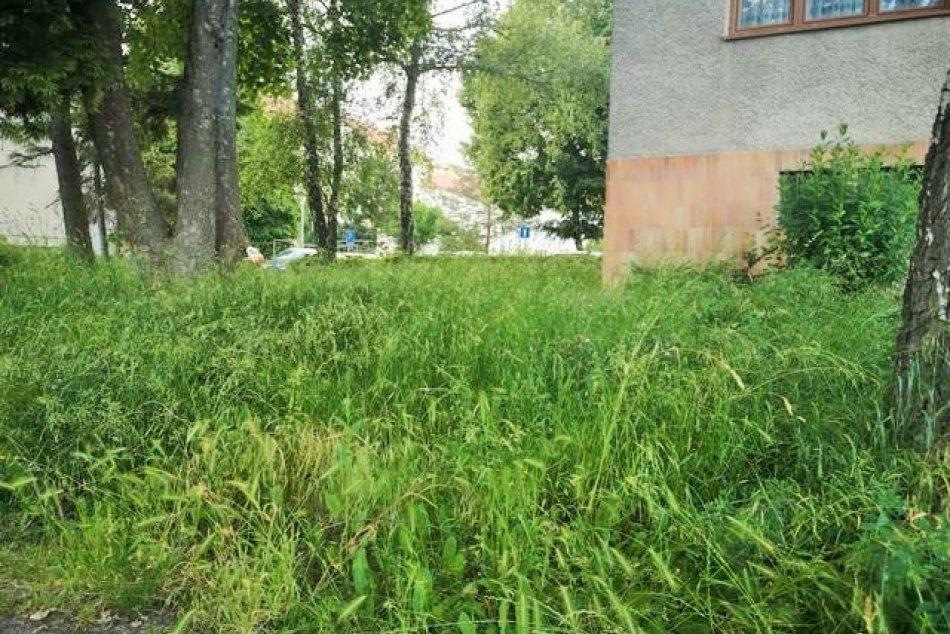 Objektívom: Stav zarastených sídlisk v Prešove očami čitateľky