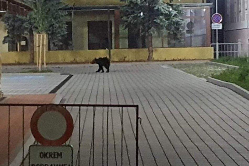 FOTO: Medveď sa v noci prechádzal priamo po meste
