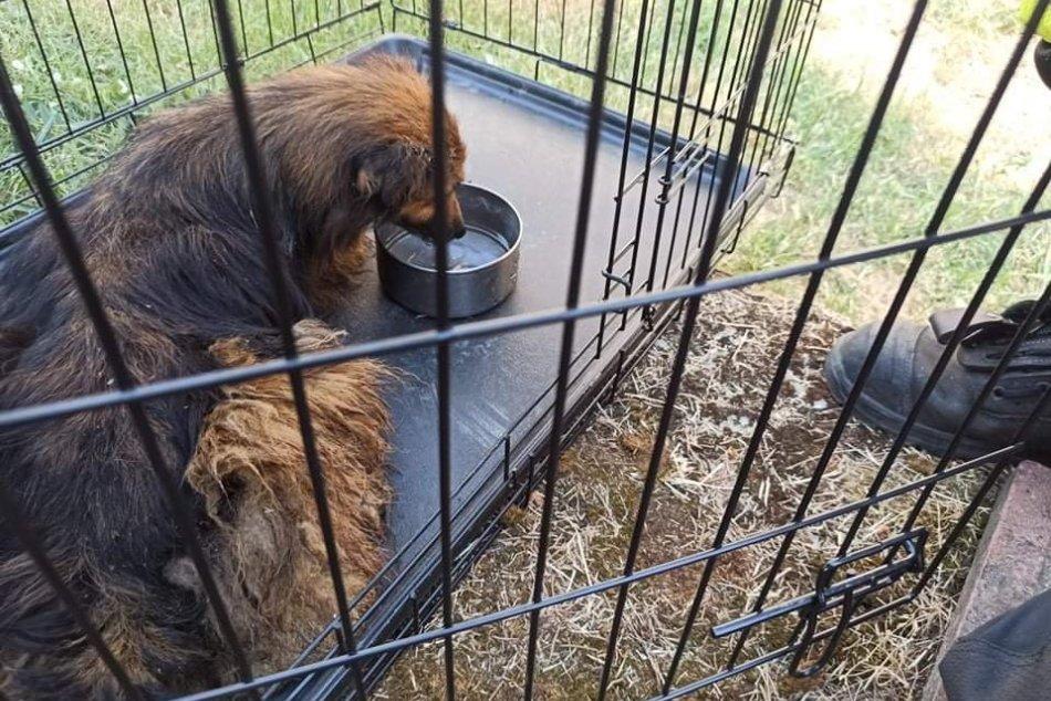 OBRAZOM: Hasiči pomáhali psíkovi, ktorý spadol do studne
