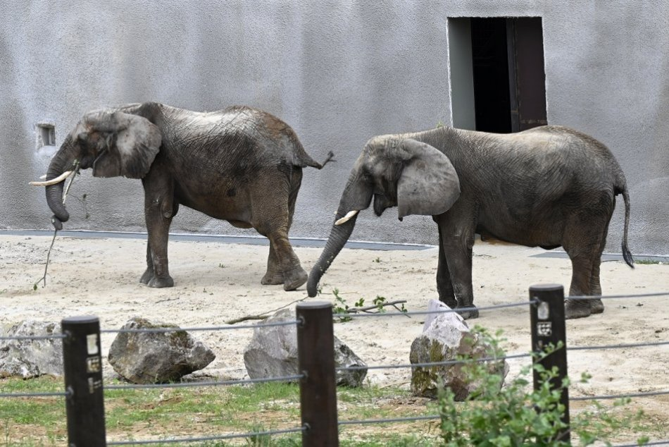 OBRAZOM: Jediné slony na Slovensku majú nový pavilón v bojnickej zoo