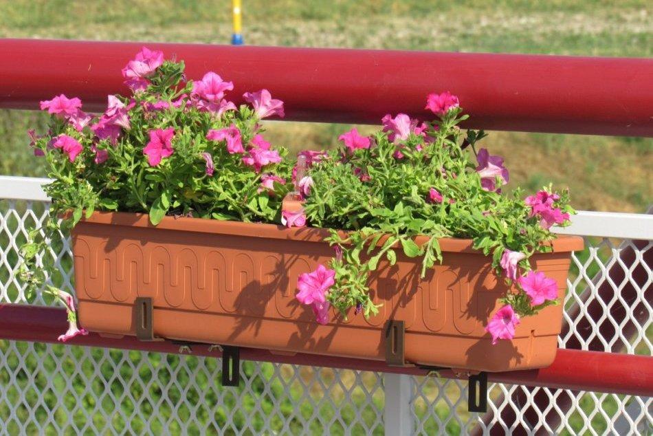 Objektívom: Na Levočskej ulici pribudli pestrofarebné kvety