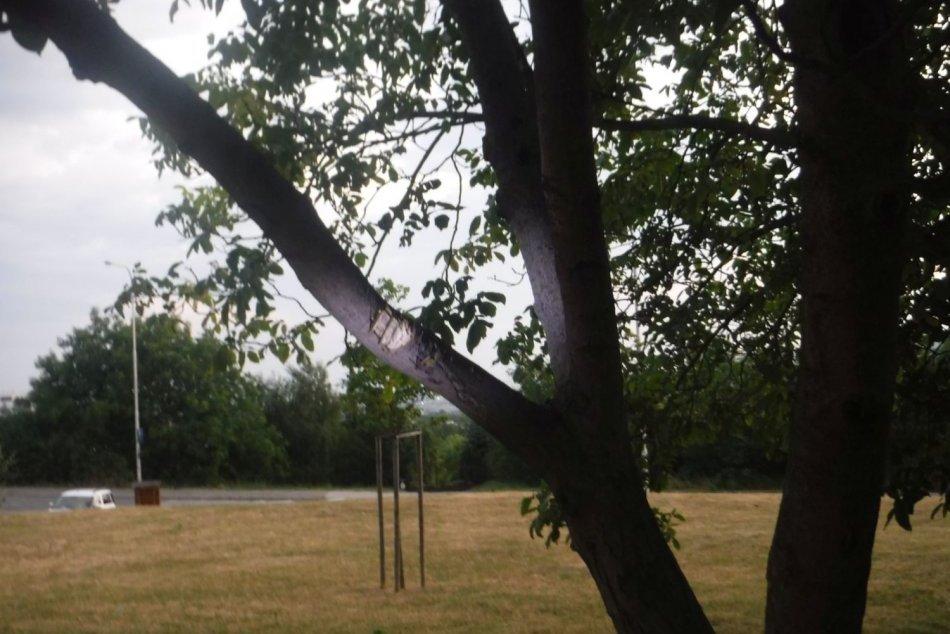Žena v Nitre sekala do stromu mačetou