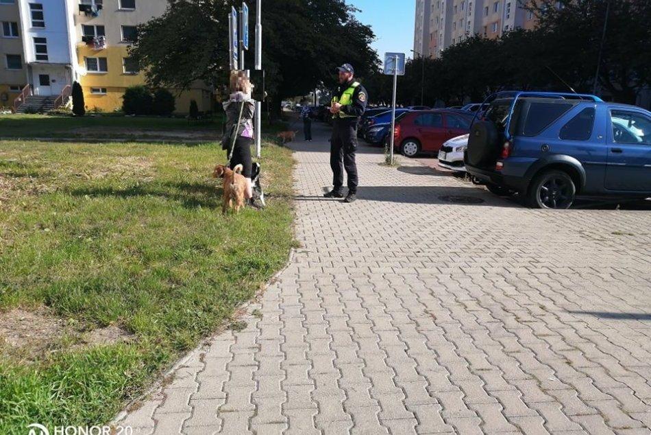 Kontroly dodržiavania povinností psíčkarov vo Zvolene