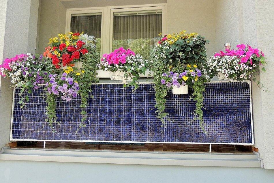 Objektívom: Najkrajšie predzáhradky a balkóny v Prešove
