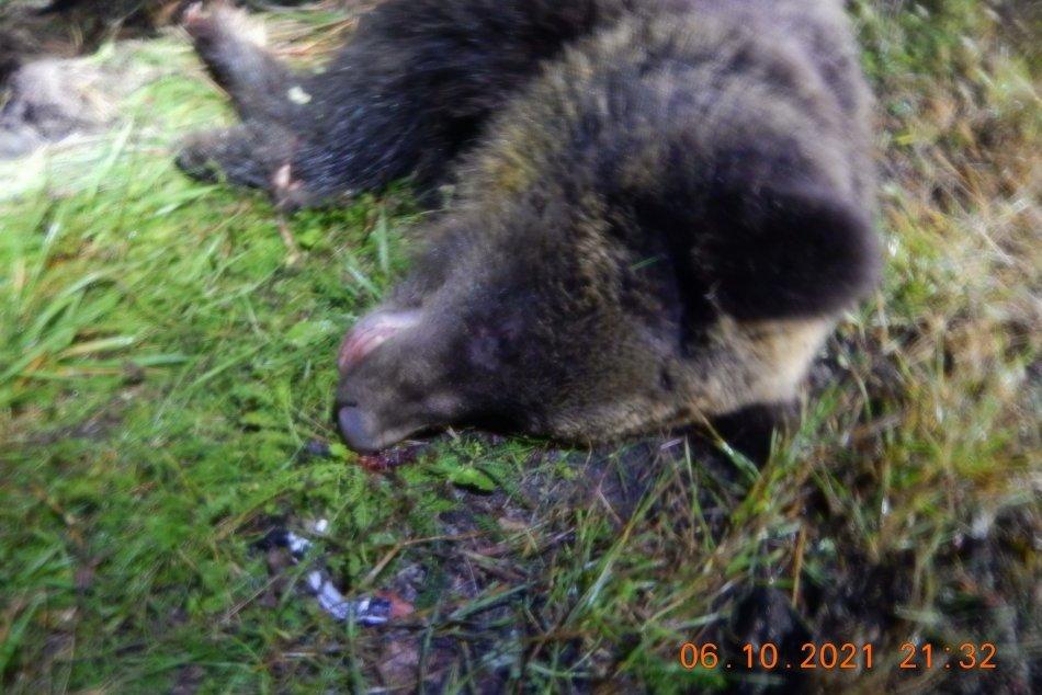 V OBRAZOCH: Po zrážke s medveďom zostali poškodené 2 autá